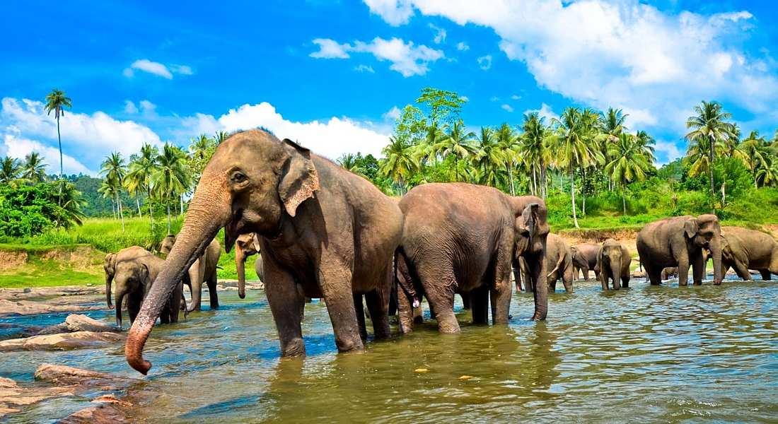 Vacances au Sri Lanka: où aller, météo et attractions